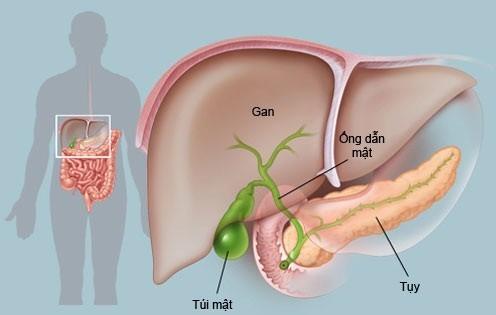 Các bệnh lí về gan mật đã và đang là nỗi lo của rất nhiều người hiện nay.
