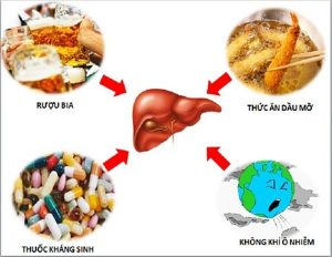 Có nhiều nguyên nhân gây ra các bệnh lí về gan, để phòng tránh và điều trị bệnh hiệu quả, biện pháp tích cực nhất là giảm thiểu và loại bỏ nguyên nhân gây bệnh.