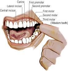 Sâu răng là một trong những bệnh răng miệng phổ biến và có tỉ lệ người mắc cao nhất hiện nay.