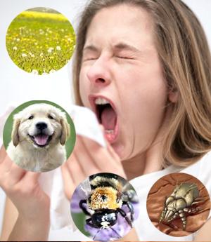 Thuốc chữa bệnh viêm mũi dị ứng2