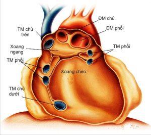 Cấu trúc giải phẫu khoang màng tinh