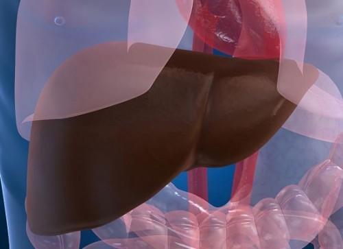 Cách điều trị bệnh gan nhiễm mỡ2