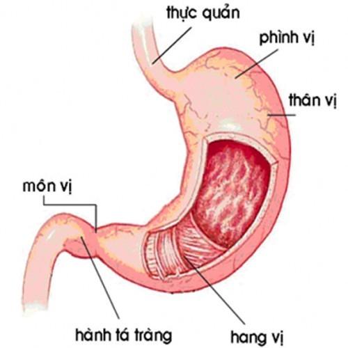 Cách điều trị viêm dạ dày có HP2