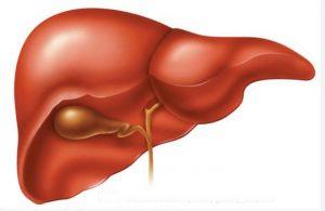 Bệnh gan B có lây qua đường hô hấp không