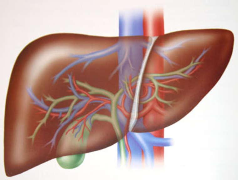 Bệnh viêm gan B có chữa được không2