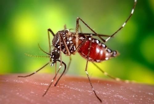 Sốt rét lây truyền qua muỗi bị nhiễm bệnh, không qua tiếp xúc trực tiếp với một người bị nhiễm bệnh.