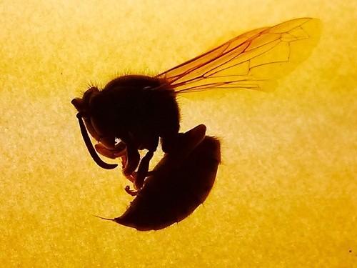 Vết cắn do côn trùng như ong bắp cày và kiến lửa có thể gây nổi mề đay và sưng ở những người bị dị ứng côn trùng.