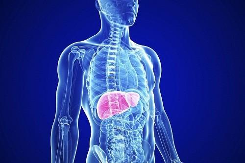 Nếu được phát hiện sớm, một số bệnh về gan có thể phòng ngừa và điều trị hiệu quả.