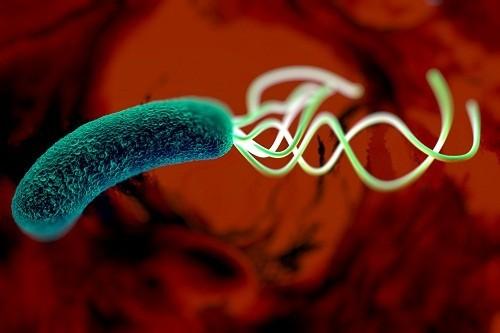Vi khuẩn HP có thể được phát hiện trong một xét nghiệm máu, xét nghiệm phân hoặc test thở. Vi khuẩn HP có thể được phát hiện trong một xét nghiệm máu, xét nghiệm phân hoặc test thở.