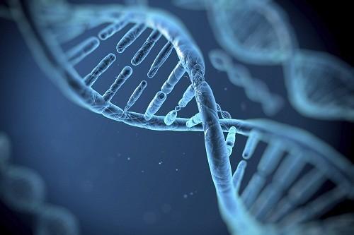 Một số gen nhất định có liên quan đến bệnh vẩy nến. Những người mang các gen này có nhiều nguy cơ phát triển bệnh vẩy nến hơn.