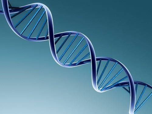 Xét nghiệm karyotype là một xét nghiệm để xác định và đánh giá kích thước, hình dạng và số lượng nhiễm sắc thể trong một mẫu tế bào cơ thể.