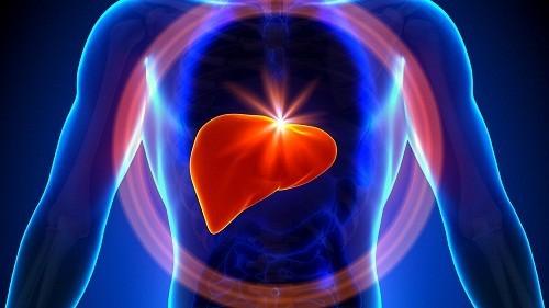 Gan lại rất dễ bị tổn thương, cụ thể gan có thể bị viêm, nhiễm mỡ, xơ hóa hoặc ung thư…
