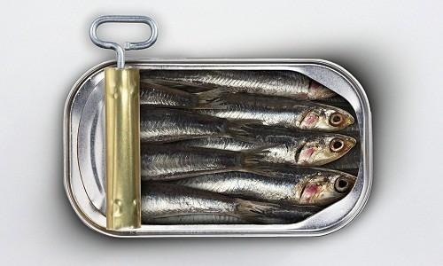 """Cá mòi cũng nằm trong danh sách những thực phẩm trả lời cho câu hỏi """"sỏi thận nên kiêng gì?""""."""
