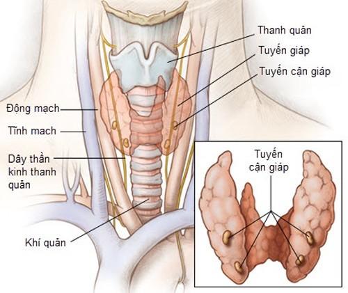 Chức năng tuyến giáp là sản xuất hormone.