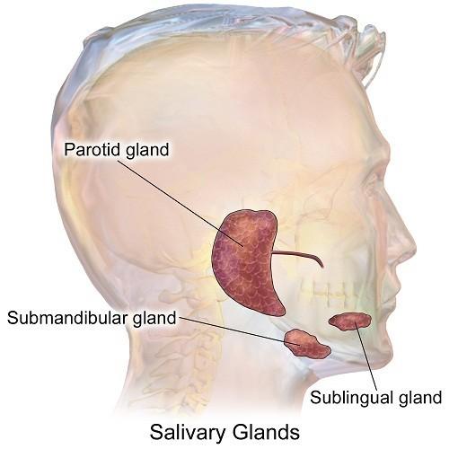 Bệnh lý tuyến nước bọt là thuật ngữ chung được dùng để chỉ những rối loạn gây ảnh hưởng chức năng, làm gián đoạn hoạt động của tuyến nước bọt.