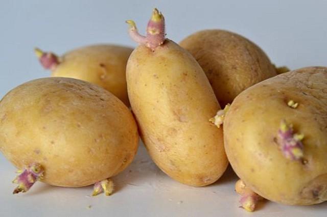 Khoai tây là thực phẩm dinh dưỡng, tuy nhiên nếu khoai tây đã mọc mầm thì mẹ bầu lại không nên ăn vì trong khoai tây đó có chứa độc tố solaninne, chất độc này nếu tích tụ trong cơ thể sẽ khiến thai nhi bị dị tật dị dạng rất nguy hiểm.