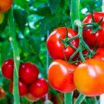 Những loại rau củ quả cực tốt cho huyết áp