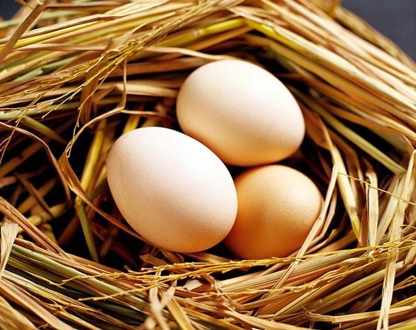 Trứng gà lâu nay được coi là nguồn thực phẩm có giá trị dinh dưỡng rất tốt. Nam giới bị yếu sinh lý ăn trứng gà giúp cải thiện rất nhiều.