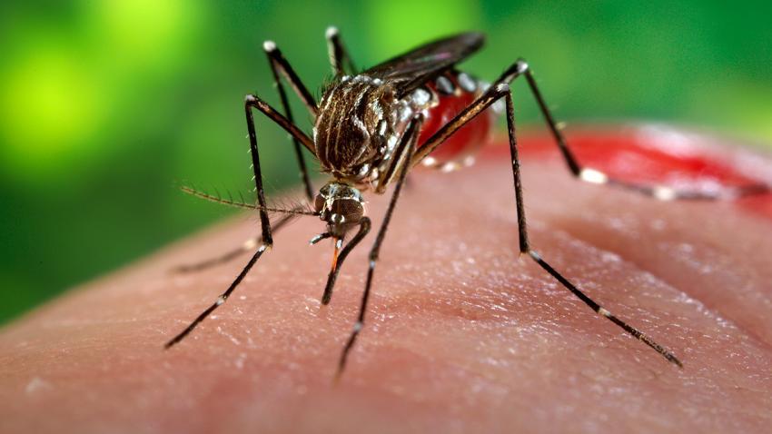 83-nguoi-sai-gon-nhiem-virus-zika