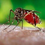 Bệnh viện ĐKQT Thu Cúc sẵn sàng ứng phó với dịch bệnh do virus Zika