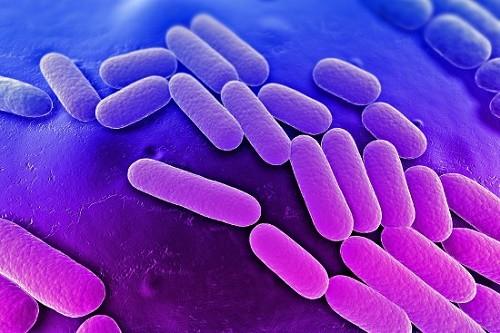 Khi xâm nhập vào cơ thể, vi trùng lao theo đường máu và bạch huyết có thể đến cư trú,