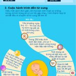 Những điều cần biết về sự thụ thai