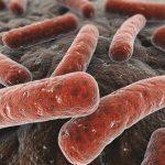 Bệnh lao phổi có chữa được không?