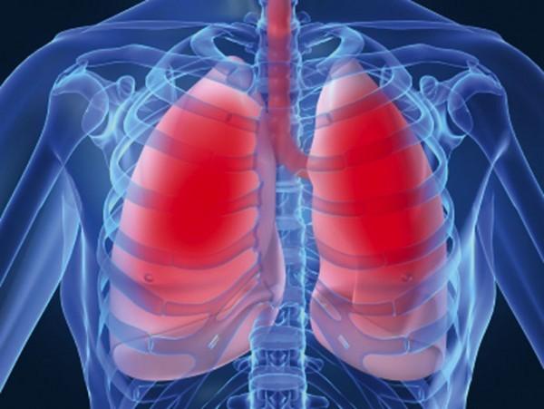 Đường hô hấp dưới bao gồm phổi và phế quản