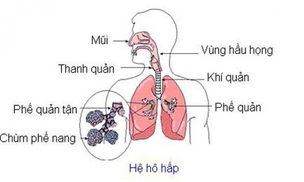Hệ hô hấp gồm nhiều cơ quan khác nhau