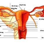 Mổ tách dính buồng tử cung