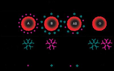 Xét nghiệm nhóm máu bao nhiêu tiền?