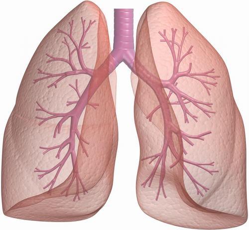 Phổi là cơ quan quan trọng trong cơ thể, giúp duy trì sự sống.