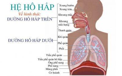 Tìm hiểu về hệ hô hấp ở trẻ nhỏ