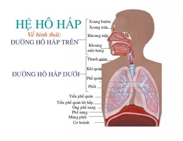 """Kết quả hình ảnh cho người gặp vấn đề về hệ hô hấp"""""""