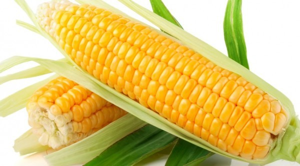 Ngô chứa nhiều các acid béo không no, có khả năng thúc đẩy quá trình chuyển hóa của chất béo nói chung và cholesterol nói riêng