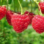 Top thực phẩm tốt cho người bệnh tiểu đường