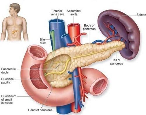 Ung thư tuyến tụy phát triển là do tế bào ung thư hình thành trong các mô của tuyến tụy.