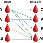 Nhóm máu O – những thông tin bổ ích mà bạn nên biết