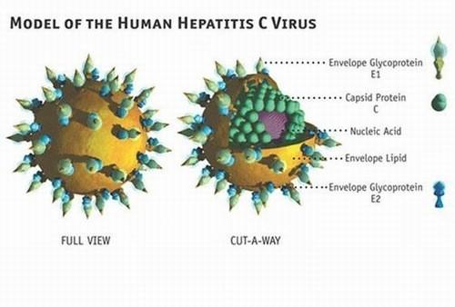 Viêm gan C cần được phát hiện sớm và điều trị hiệu quả