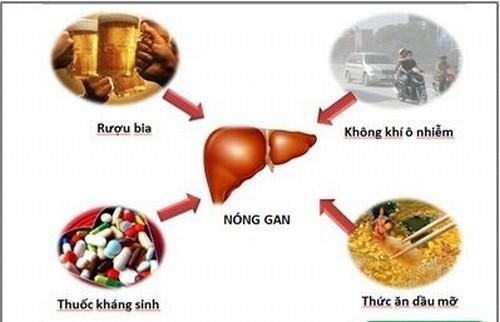 Có nhiều nguyên nhân gây bệnh nóng gan