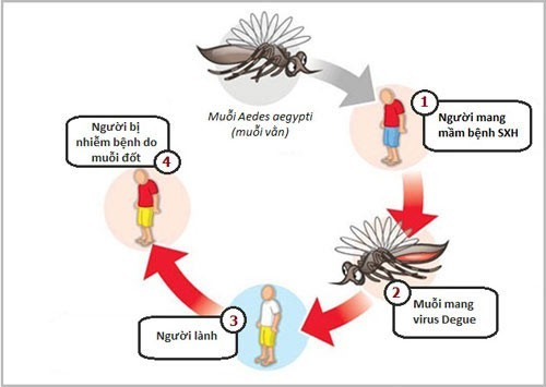 sot-xuat-huyet-Dengue-1