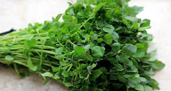 Cải xoong cung cấp nhiều dưỡng chất cần thiết với hàm lượng cao, không những thês còn có tính kháng khuẩn, ức chế được nhiều vi trùng gây mụn nhọt.