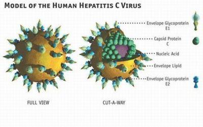 Xét nghiệm HCV RNA là gì?