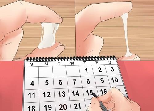 Tính ngày rụng trứng dựa vào chu kỳ kinh hoặc sự thay đổi của cơ thể