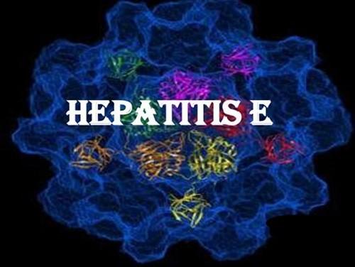 Viêm gan E không phổ biến nhưng có thể gây biến chứng nguy hiểm