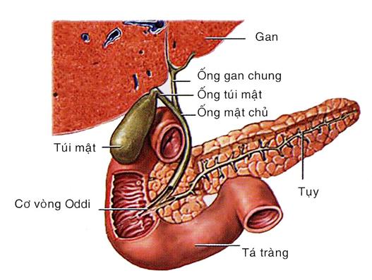 Sỏi mật không được điều trị kịp thời có thể gây biến chứng áp xe gan