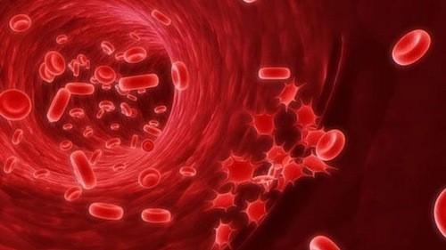 Chỉ số hồng cầu trong máu giúp chẩn đoán tình trạng máu trong cơ thể