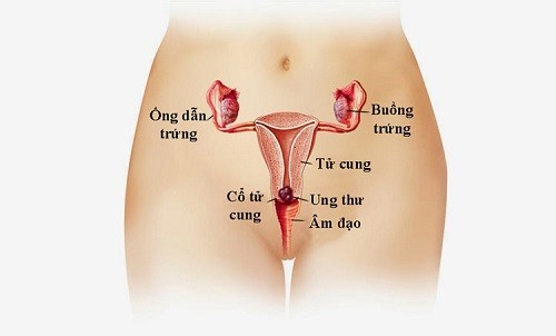 Đi khám ung thư cổ tử cung ở đâu