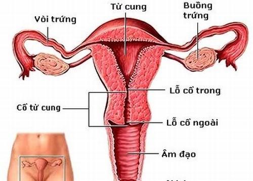 Cấu tạo cơ quan sinh sản của nữ giới