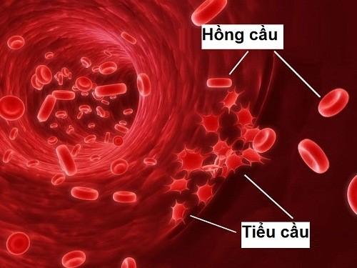 Tiểu cầu giữ vai trò quan trọng giúp cơ thể cầm máu